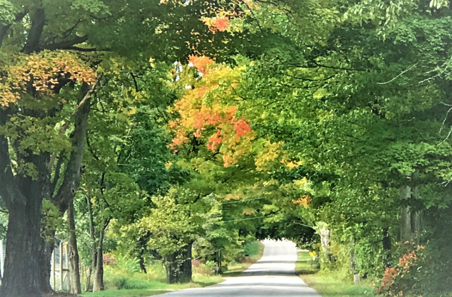 fall color trees road