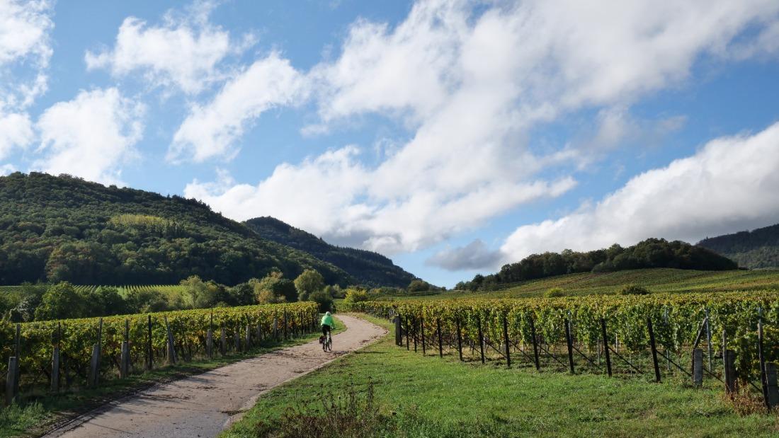 solo cyclist biking through dirt path past vineyards