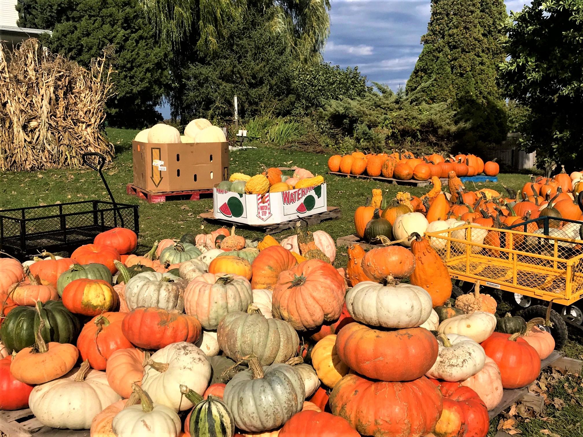 GABB Colorful Fall Pumpkins Galore 2020