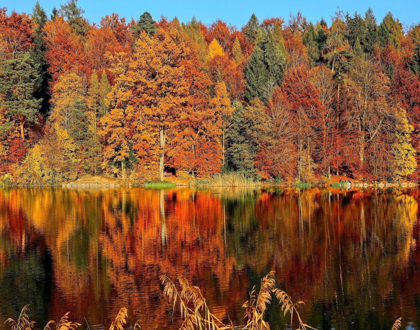 fall foliage on the water